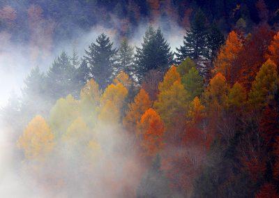 Novembermorgen auf dem Schauinsland