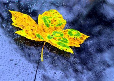 Herbstdetail