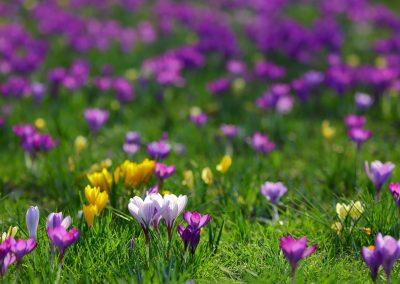 Blütenteppich im Stadtgarten Freiburg